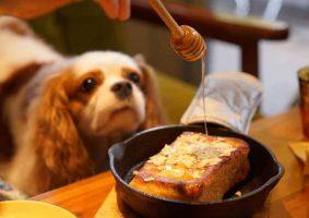 Köpekler Bal Yiyebilir mi