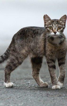 Yabani Kedi ve Sokak Kedisi Arasındaki Fark